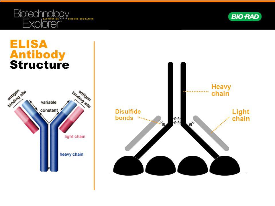 ELISA Antibody Structure Light chain Heavy chain Disulfide bonds