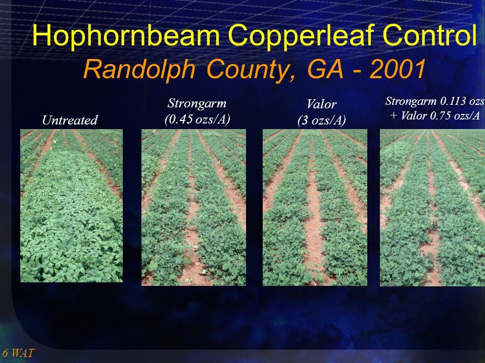 Hophornbeam Copperleaf Control Randolph County, GA - 2001 6 WAT Untreated Strongarm (0.45 ozs/A) Valor (3 ozs/A) Strongarm 0.113 ozs + Valor 0.75 ozs/A