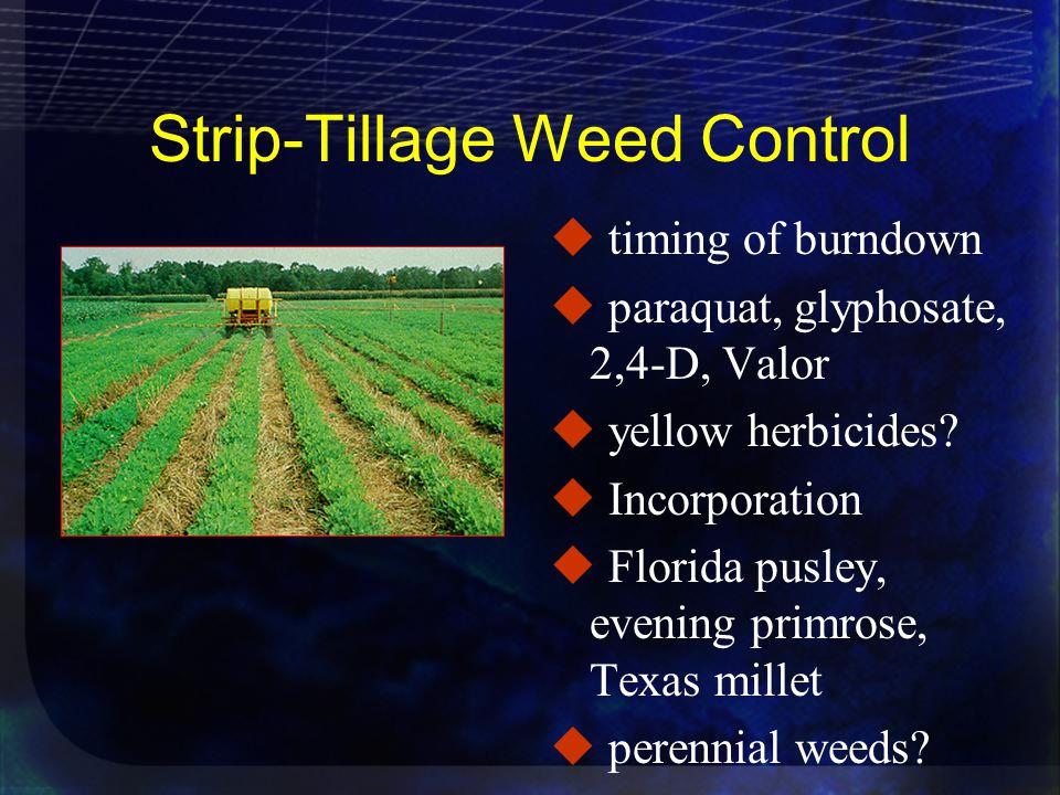 Strip-Tillage Weed Control u timing of burndown u paraquat, glyphosate, 2,4-D, Valor u yellow herbicides.