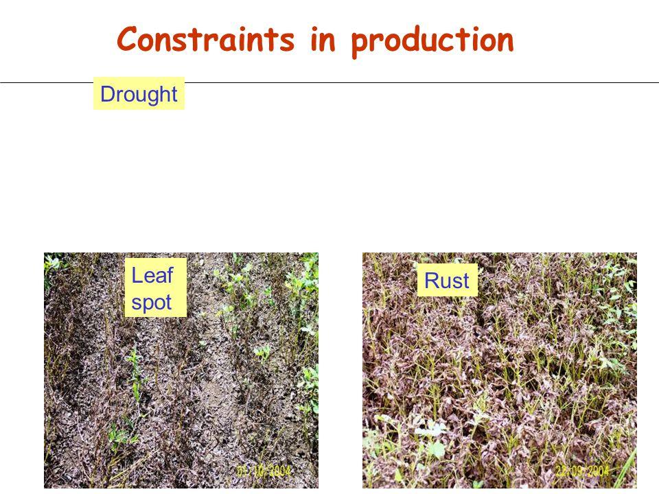 Indian Groundnut Genomics Consortium - Indian Council of Agricultural Research Three main partners: ICRISAT, Patancheru, A.P.