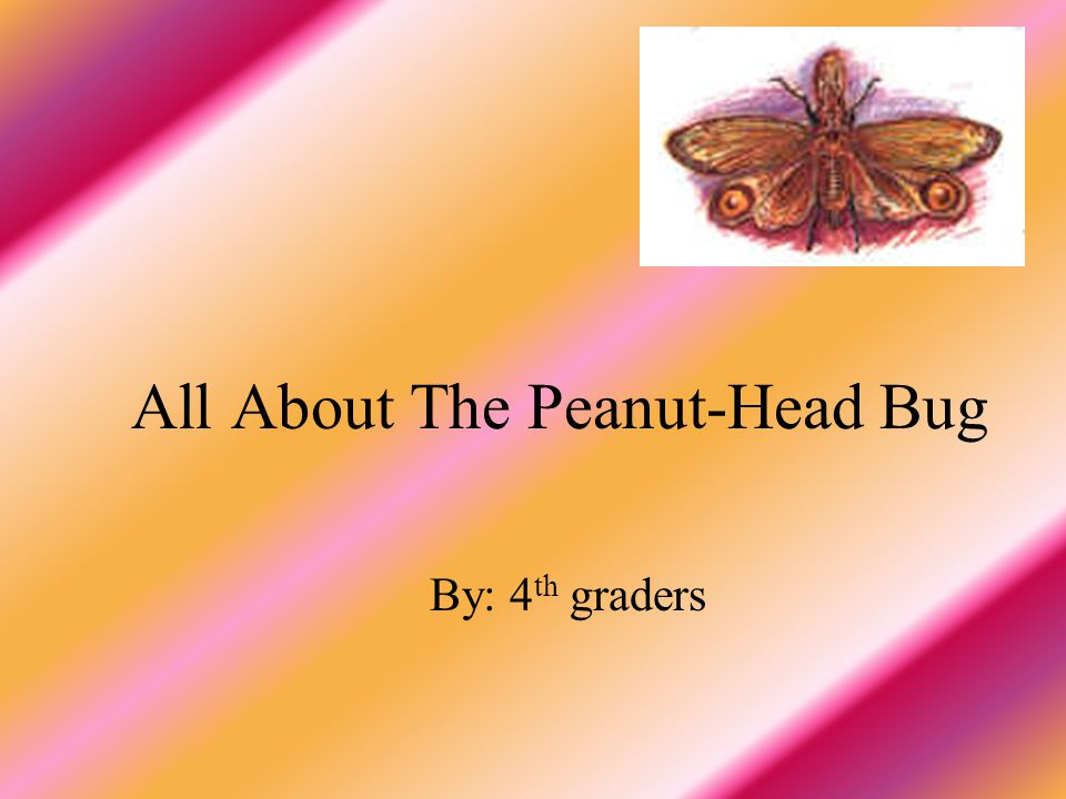 All About The Peanut-Head Bug By: 4 th graders
