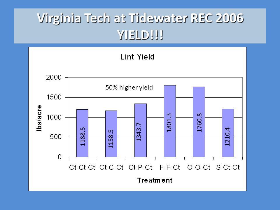 Virginia Tech at Tidewater REC 2006 YIELD!!! 1188.5 1158.5 1343.7 1801.31760.8 1210.4 50% higher yield
