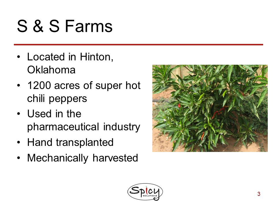 3 S & S Farms Located in Hinton, Oklahoma 1200 acres of super hot chili peppers Used in the pharmaceutical industry Hand transplanted Mechanically har