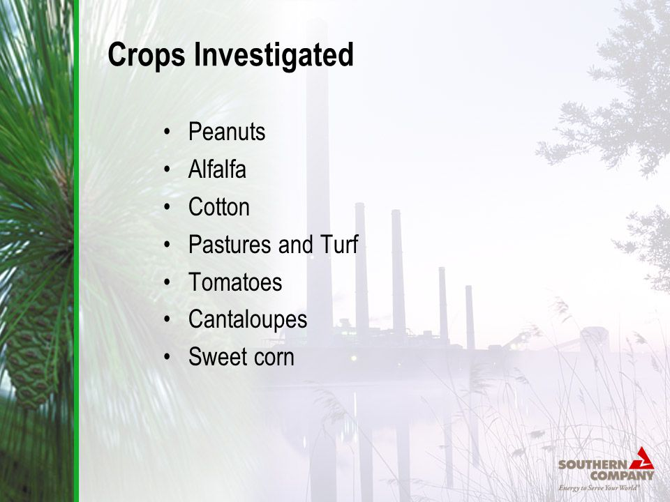 Crops Investigated Peanuts Alfalfa Cotton Pastures and Turf Tomatoes Cantaloupes Sweet corn