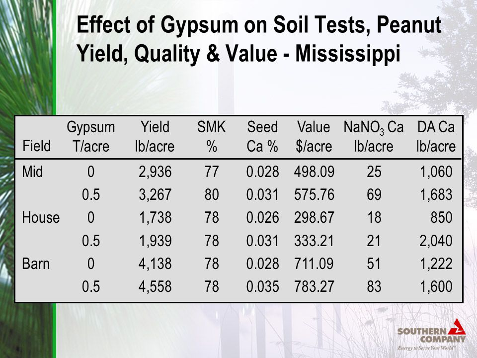 Effect of Gypsum on Soil Tests, Peanut Yield, Quality & Value - Mississippi Gypsum T/acre 0 0.5 0 0.5 0 0.5 Yield lb/acre 2,936 3,267 1,738 1,939 4,138 4,558 SMK % 77 80 78 Seed Ca % 0.028 0.031 0.026 0.031 0.028 0.035 Value $/acre 498.09 575.76 298.67 333.21 711.09 783.27 NaNO 3 Ca lb/acre 25 69 18 21 51 83 DA Ca lb/acre 1,060 1,683 850 2,040 1,222 1,600 Field Mid House Barn