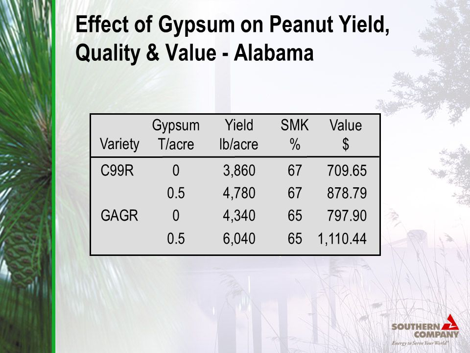 Effect of Gypsum on Peanut Yield, Quality & Value - Alabama Gypsum T/acre 0 0.5 0 0.5 Yield lb/acre 3,860 4,780 4,340 6,040 SMK % 67 65 Variety C99R GAGR Value $ 709.65 878.79 797.90 1,110.44