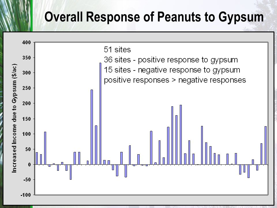 Overall Response of Peanuts to Gypsum