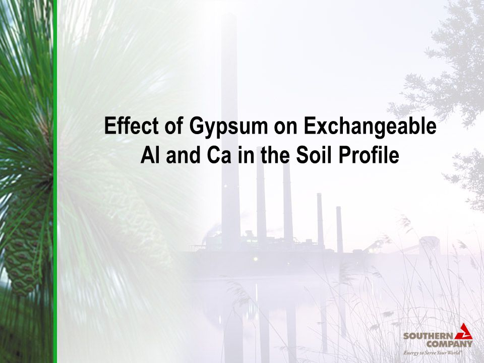 Effect of Gypsum on Exchangeable Al and Ca in the Soil Profile