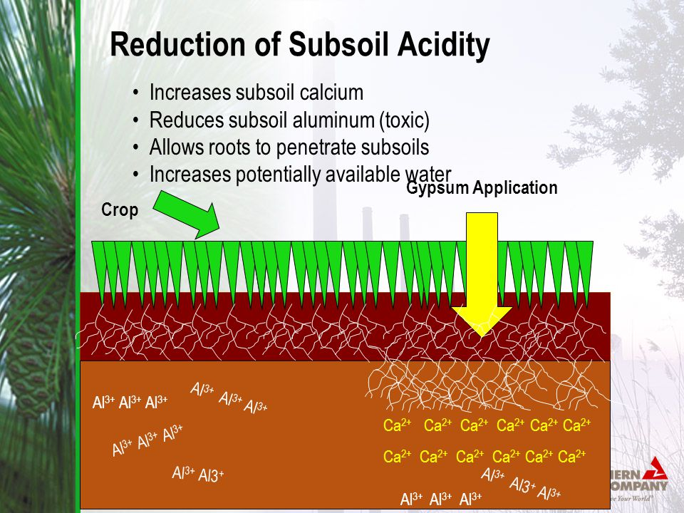 Al 3+ Al 3+ Al 3+ Al 3+ Al3 + Al 3+ Al 3+ Al 3+ Gypsum Application Al 3+ Al 3+ Al 3+ Ca 2+ Ca 2+ Ca 2+ Crop Reduction of Subsoil Acidity Increases subsoil calcium Reduces subsoil aluminum (toxic) Allows roots to penetrate subsoils Increases potentially available water