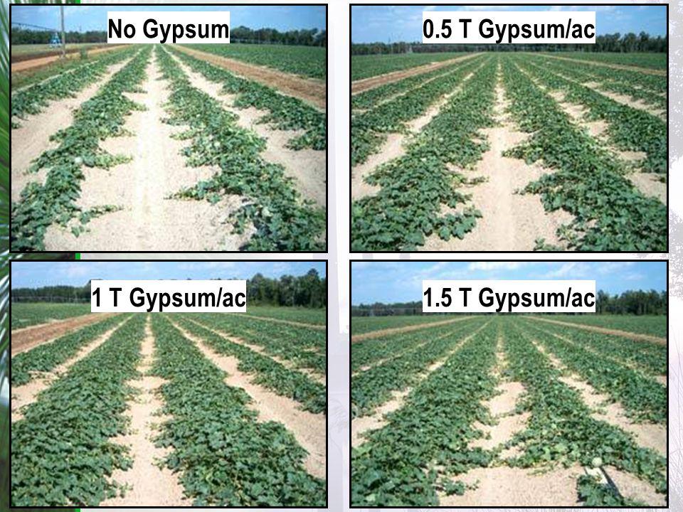No Gypsum0.5 T Gypsum/ac 1 T Gypsum/ac1.5 T Gypsum/ac