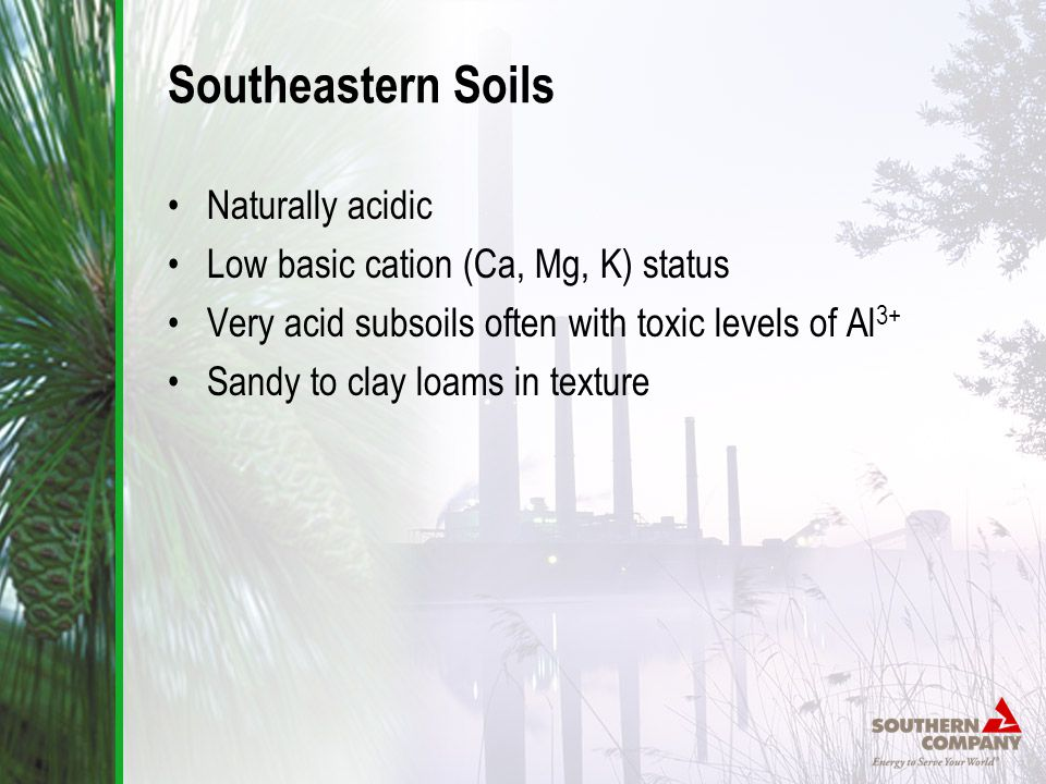 Southeastern Soils Naturally acidic Low basic cation (Ca, Mg, K) status Very acid subsoils often with toxic levels of Al 3+ Sandy to clay loams in texture
