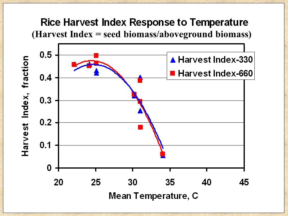General Rule of Thumb Rice seed yield decreased about 10% for each 1°C increase above the OPTIMUM temperature for seed production.