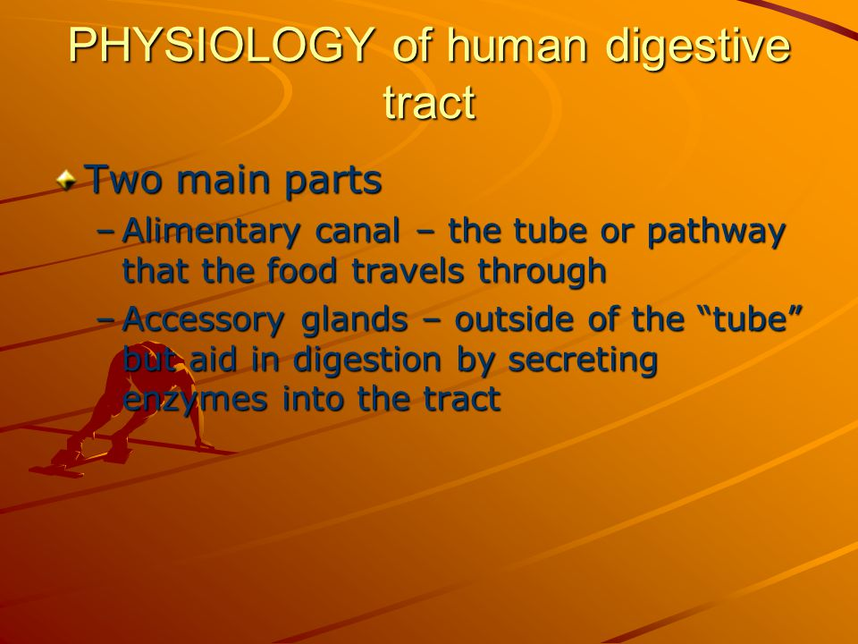 PHYSIOLOGY of human digestive tract Two main parts –Alimentary canal – the tube or pathway that the food travels through –Accessory glands – outside of the tube but aid in digestion by secreting enzymes into the tract