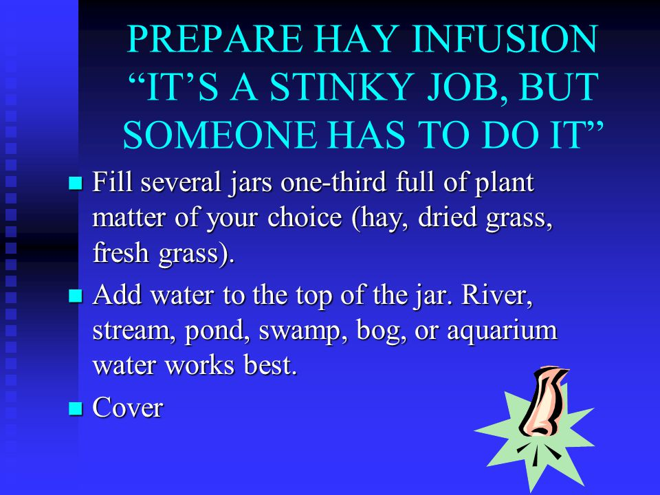 PREPARE HAY INFUSION IT'S A STINKY JOB, BUT SOMEONE HAS TO DO IT Fill several jars one-third full of plant matter of your choice (hay, dried grass, fresh grass).