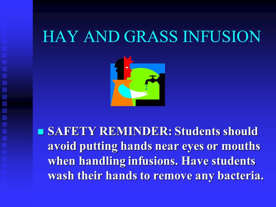 HAY AND GRASS INFUSION SAFETY REMINDER: Students should avoid putting hands near eyes or mouths when handling infusions.