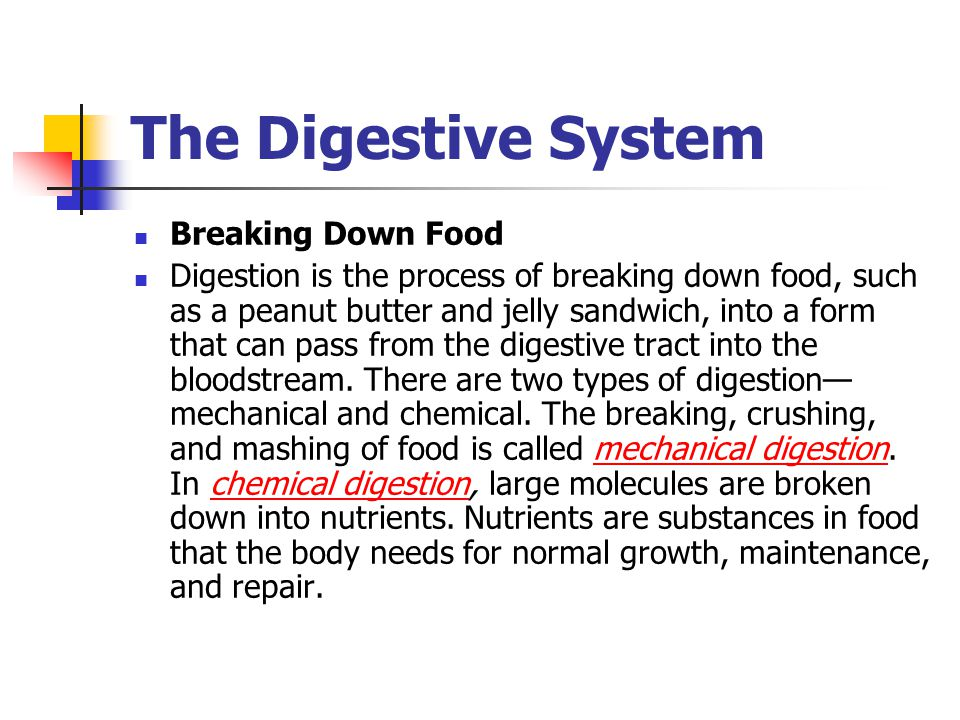 The Digestive System Breaking Down Food Digestion is the process of breaking down food, such as a peanut butter and jelly sandwich, into a form that can pass from the digestive tract into the bloodstream.