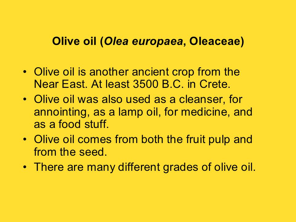 Olive oil (Olea europaea, Oleaceae) Olive oil is another ancient crop from the Near East.