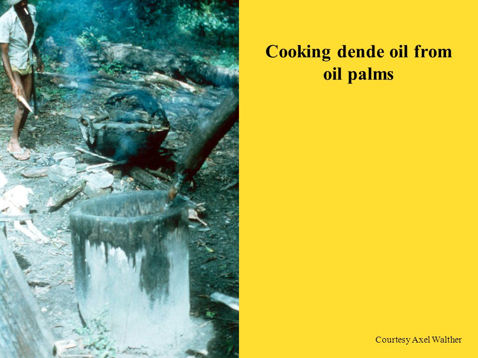 Cooking dende oil from oil palms Courtesy Axel Walther