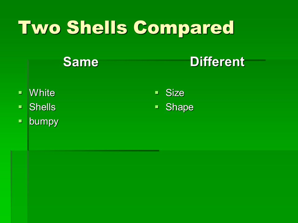 Two Shells Compared Same  White  Shells  bumpy Different  Size  Shape