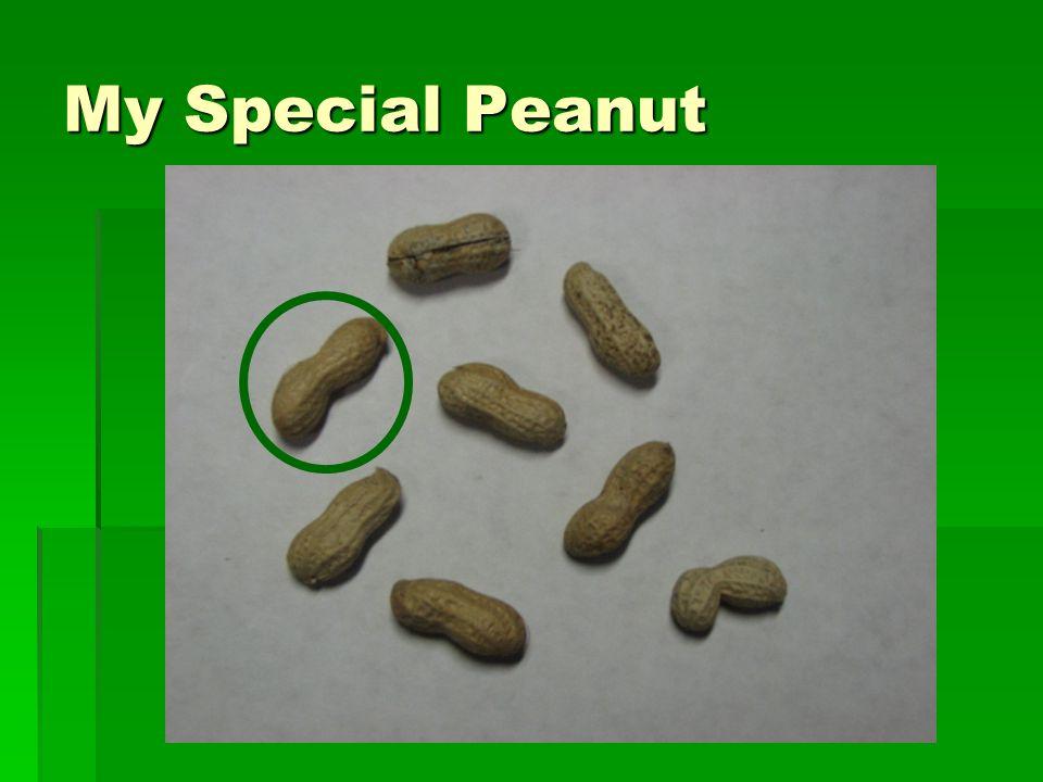 My Special Peanut