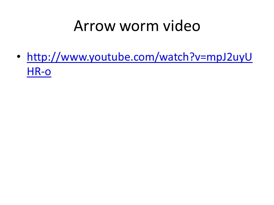 Arrow worm video http://www.youtube.com/watch?v=mpJ2uyU HR-o http://www.youtube.com/watch?v=mpJ2uyU HR-o