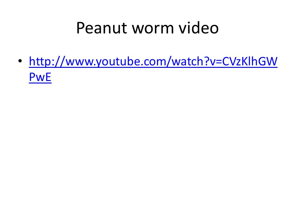Peanut worm video http://www.youtube.com/watch?v=CVzKlhGW PwE http://www.youtube.com/watch?v=CVzKlhGW PwE