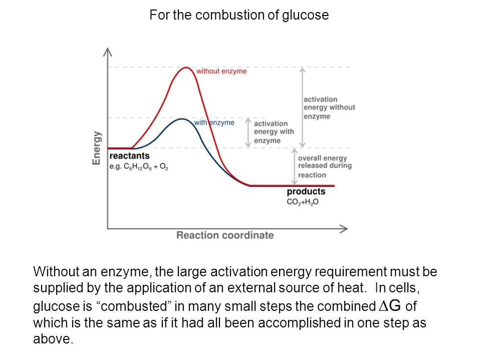 For the combustion of glucose Without an enzyme, the large activation energy requirement must be supplied by the application of an external source of heat.