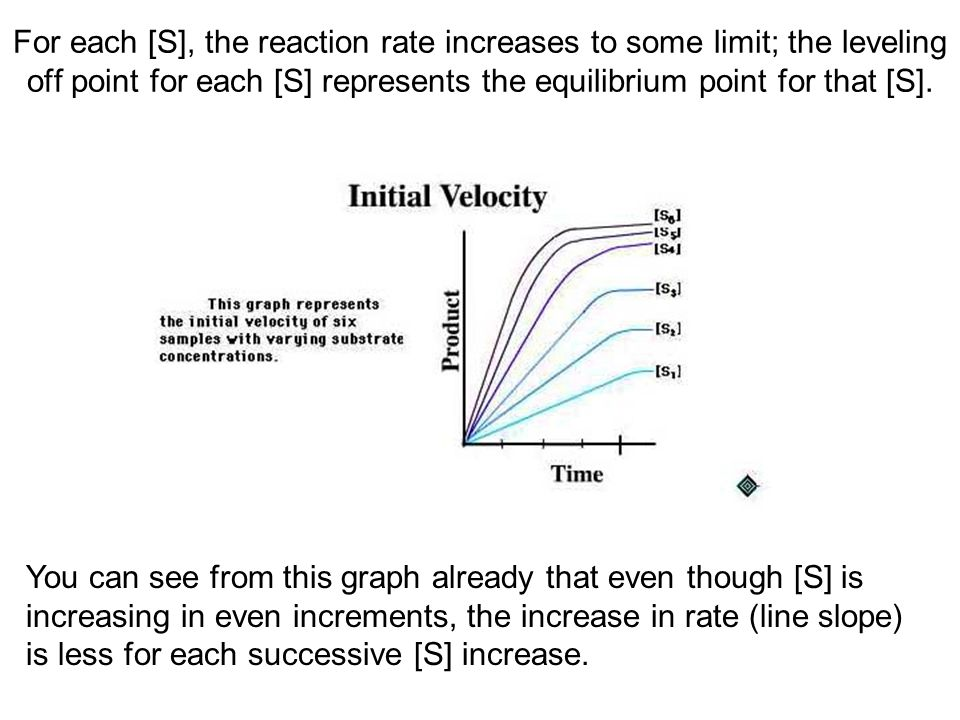 For each [S], the reaction rate increases to some limit; the leveling off point for each [S] represents the equilibrium point for that [S]. You can se