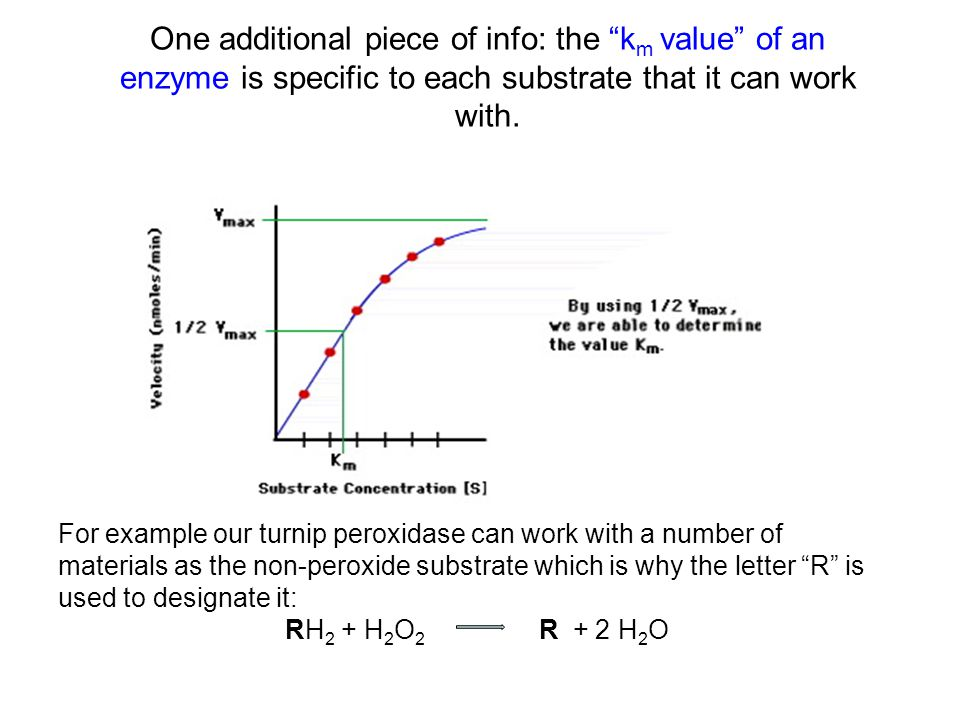 """One additional piece of info: the """"k m value"""" of an enzyme is specific to each substrate that it can work with. For example our turnip peroxidase can"""