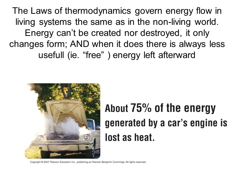 The Laws of thermodynamics govern energy flow in living systems the same as in the non-living world. Energy can't be created nor destroyed, it only ch
