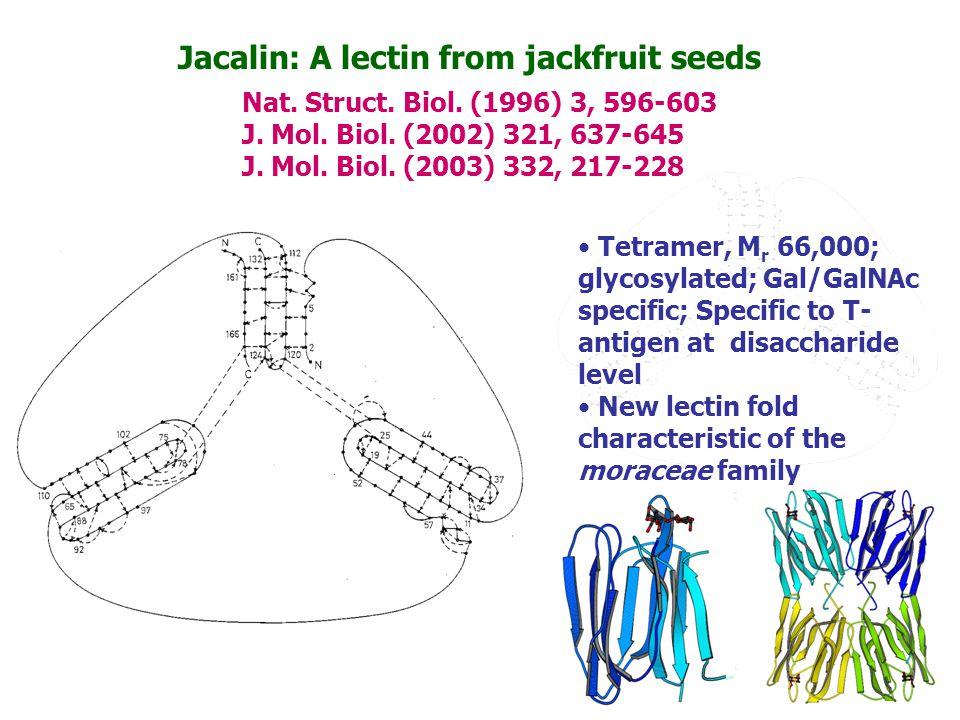 Garlic lectin-olygosaccharide interactions G.Ramachandraiah, Nagasuma R.