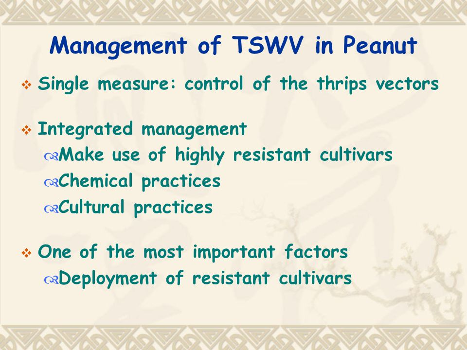 Management of TSWV in Peanut  Single measure: control of the thrips vectors  Integrated management  Make use of highly resistant cultivars  Chemical practices  Cultural practices  One of the most important factors  Deployment of resistant cultivars