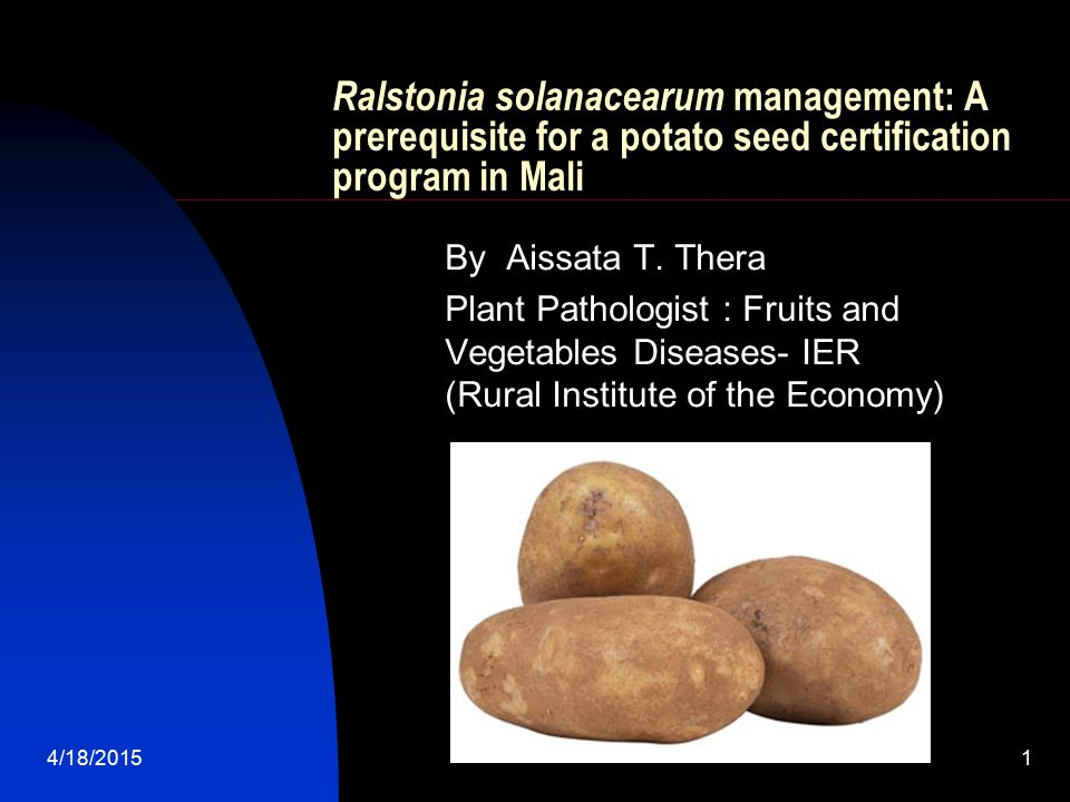 4/18/201522 Managing the Ralstonia solanacearum disease for a best production of certified seed potato in Mali.