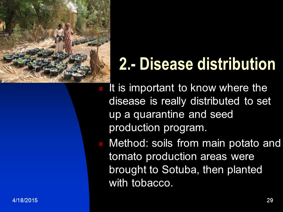 4/18/201529 2.- Disease distribution It is important to know where the disease is really distributed to set up a quarantine and seed production progra