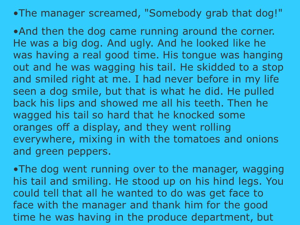 The manager screamed, Somebody grab that dog! And then the dog came running around the corner.