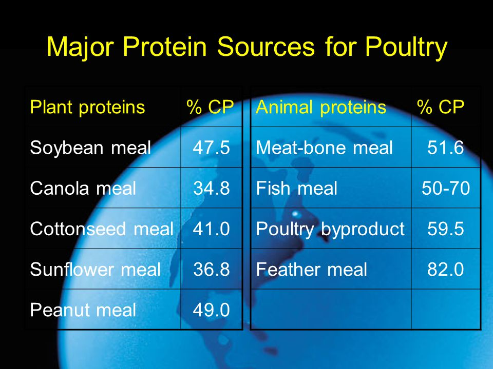 Major Protein Sources for Poultry Plant proteins% CP Soybean meal47.5 Canola meal34.8 Cottonseed meal41.0 Sunflower meal36.8 Peanut meal49.0 Animal pr