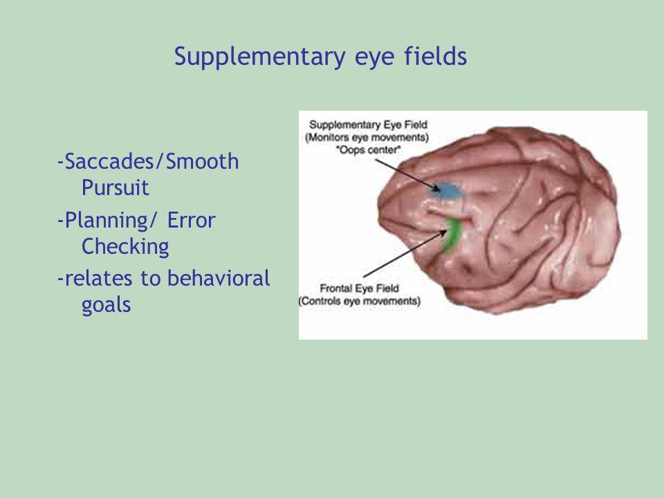 -Saccades/Smooth Pursuit -Planning/ Error Checking -relates to behavioral goals Supplementary eye fields