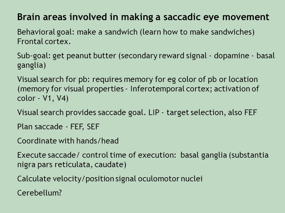 Brain areas involved in making a saccadic eye movement Behavioral goal: make a sandwich (learn how to make sandwiches) Frontal cortex. Sub-goal: get p