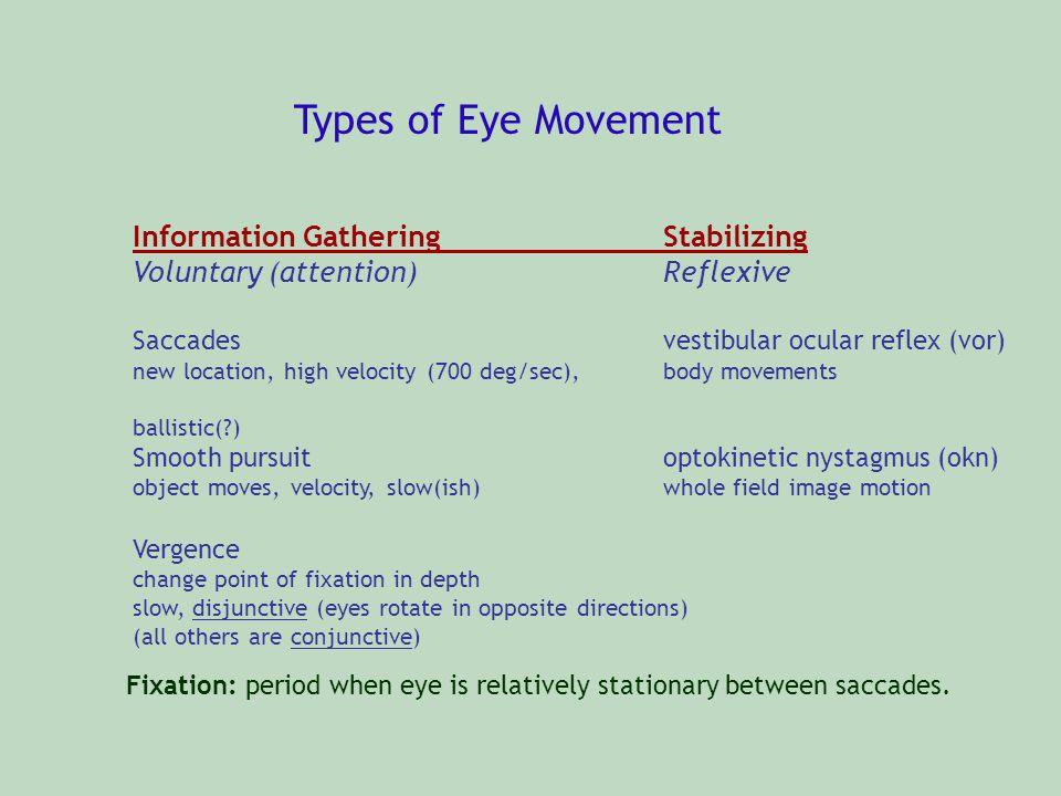 Types of Eye Movement Information GatheringStabilizing Voluntary (attention)Reflexive Saccadesvestibular ocular reflex (vor) new location, high veloci