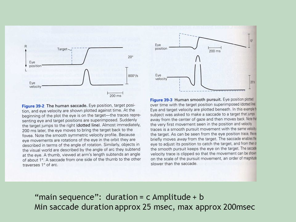"""""""main sequence"""": duration = c Amplitude + b Min saccade duration approx 25 msec, max approx 200msec"""