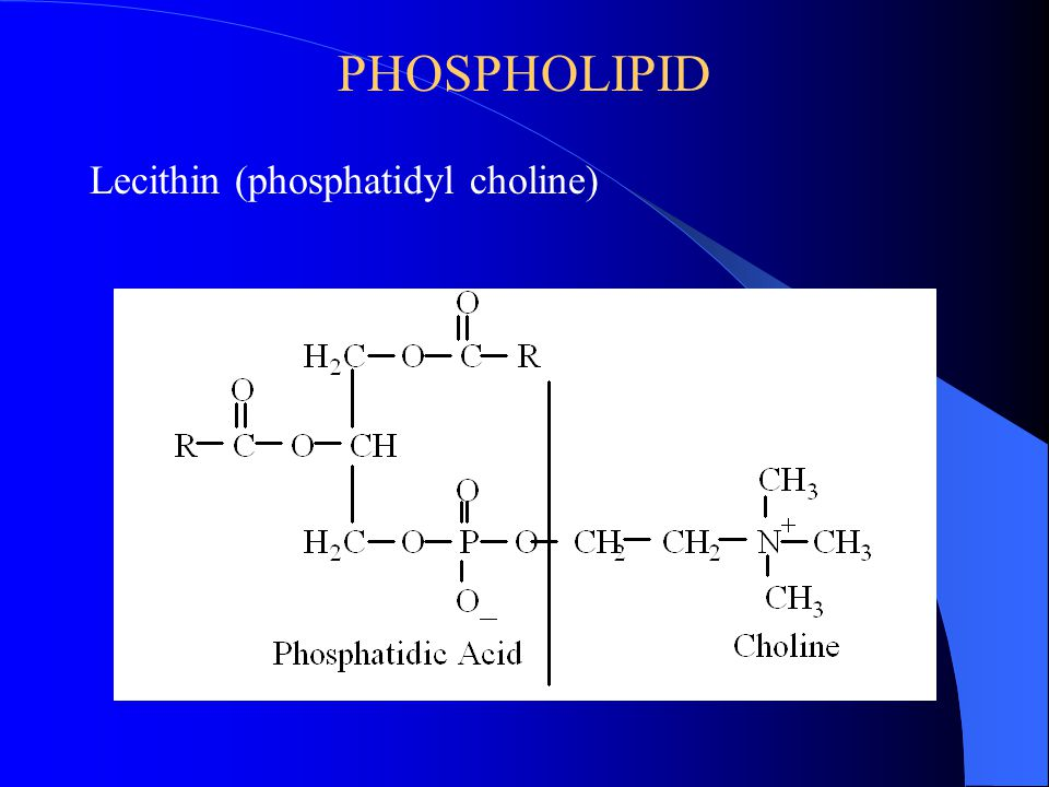 PHOSPHOLIPID Lecithin (phosphatidyl choline)