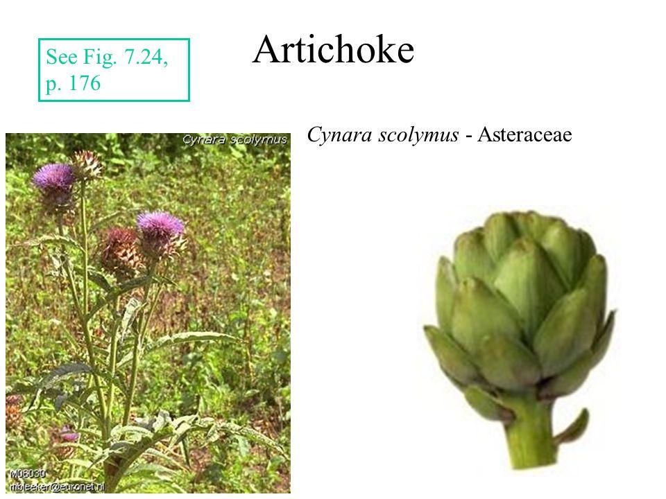 Artichoke Cynara scolymus - Asteraceae See Fig. 7.24, p. 176