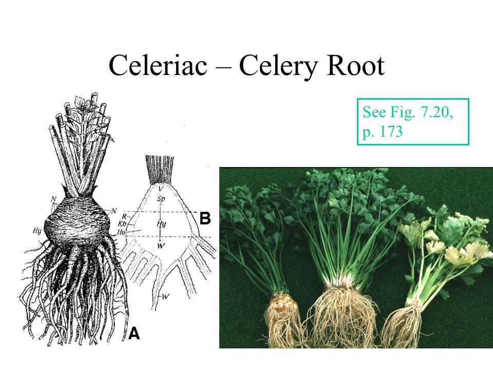 Celeriac – Celery Root See Fig. 7.20, p. 173
