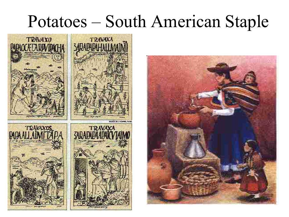 Potatoes – South American Staple