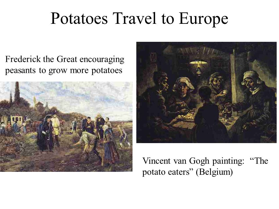 Potatoes Travel to Europe Frederick the Great encouraging peasants to grow more potatoes Vincent van Gogh painting: The potato eaters (Belgium)