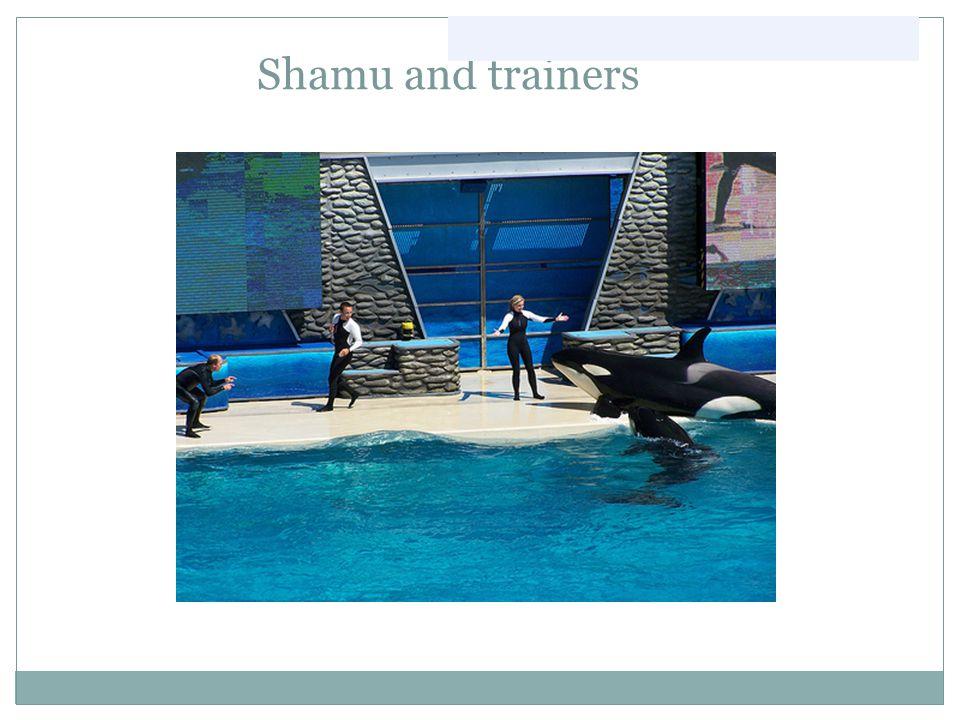Shamu and trainers