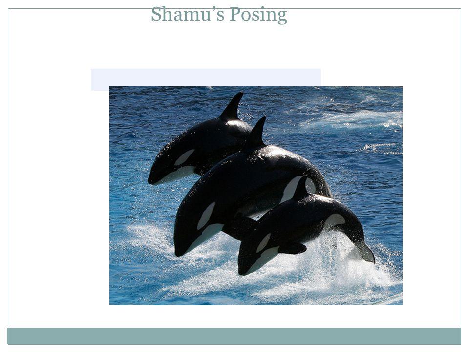 Shamu's Posing