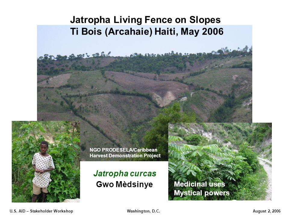 U.S. AID – Stakeholder Workshop Washington, D.C.August 2, 2006 Jatropha Living Fence on Slopes Ti Bois (Arcahaie) Haiti, May 2006 Jatropha curcas Gwo