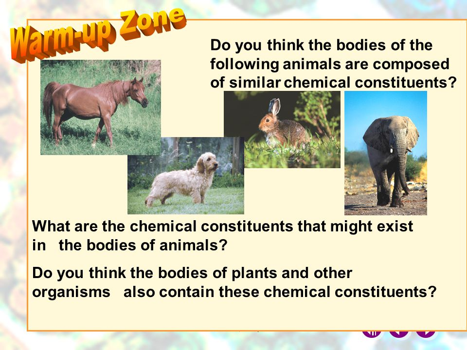 © Manhattan Press (H.K.) Ltd.1 Do you think the bodies of the following animals are composed of similar chemical constituents.
