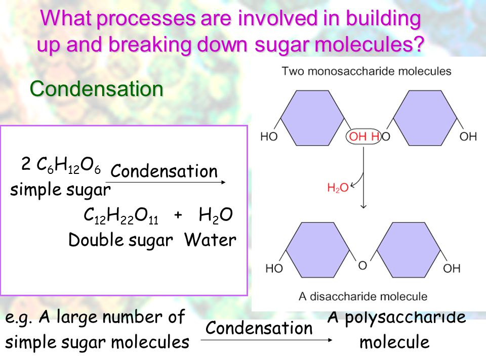© Manhattan Press (H.K.) Ltd.16 Where comes the glucose for forming the starch and cellulose in plants? Common examples: –Starch – the main form of ca